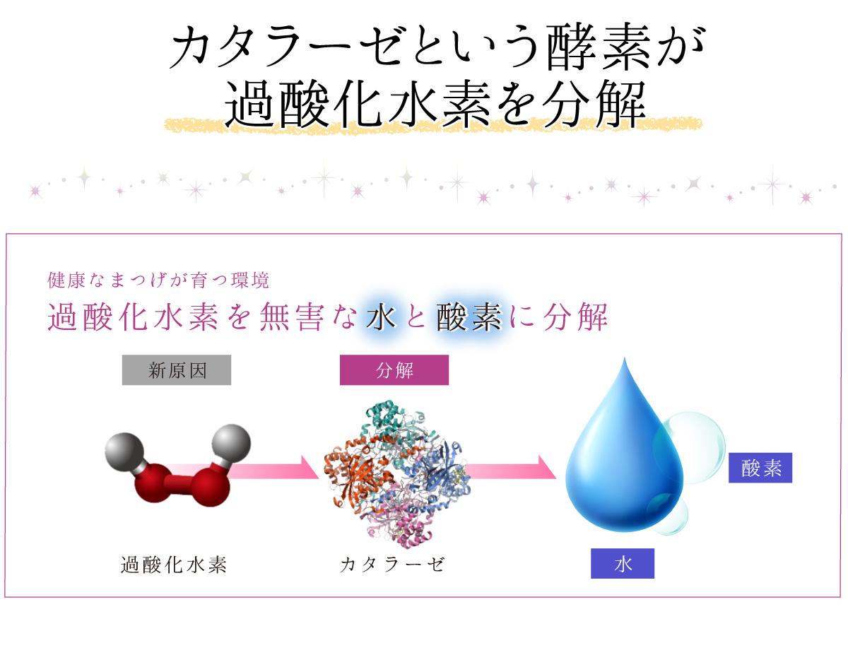カタラーゼという酵素が過酸化水素を分解